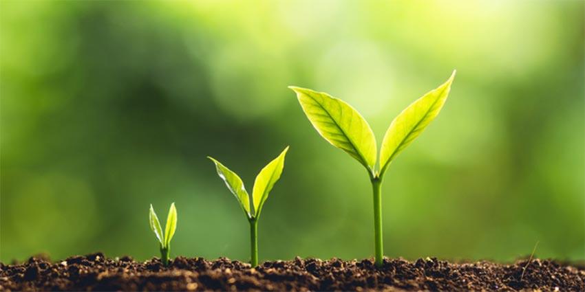 زیست گیاهی کنکور نظام جدید